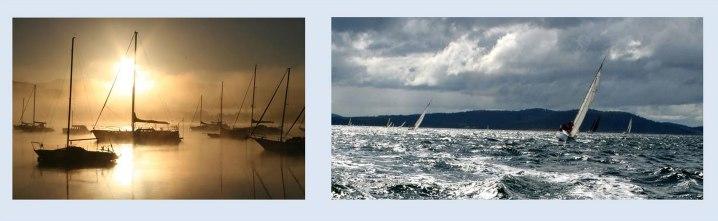 sailing-cygnet-2